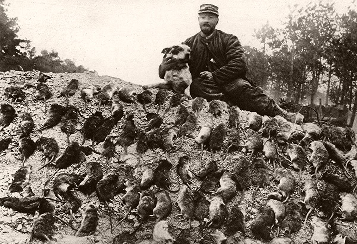 The plague of rats in the French trenches. An official rat-catcher, with his dog, and their bag. Illustration for The Illustrated War News, February 1916.