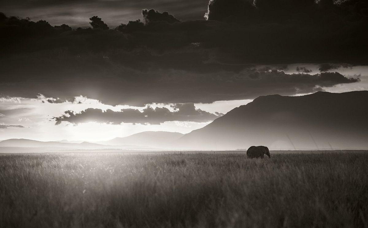 © Elephants in Heaven by Joachim Schmeisser, published by teNeues, www.teneues.com, Elephant walking through tall grass in sunset, Amboseli National Park, Kenya 2017 Photo © 2017 Joachim Schmeisser.