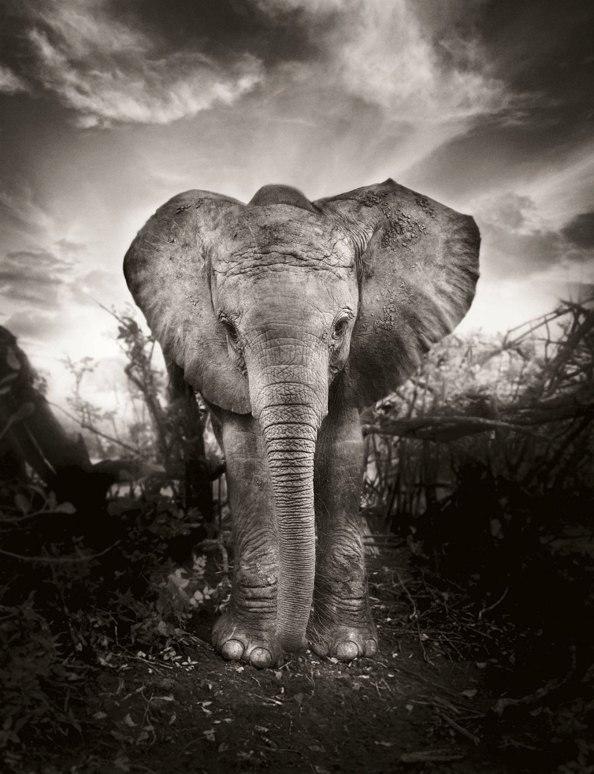 © Elephants in Heaven by Joachim Schmeisser, published by teNeues, www.teneues.com, Portrait of KIBO, one year old, Nairobi National Park 2009, Photo © 2017 Joachim Schmeisser