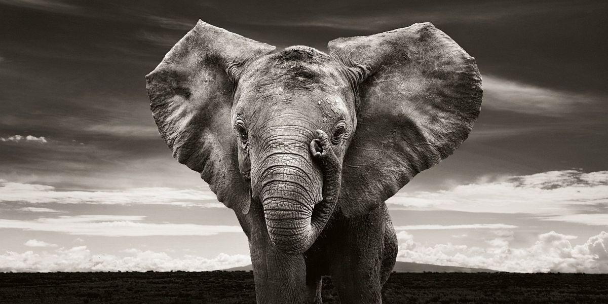 © Elephants in Heaven by Joachim Schmeisser, published by teNeues, www.teneues.com, Sabachi, Kenya 2009, Photo © 2017 Joachim Schmeisser
