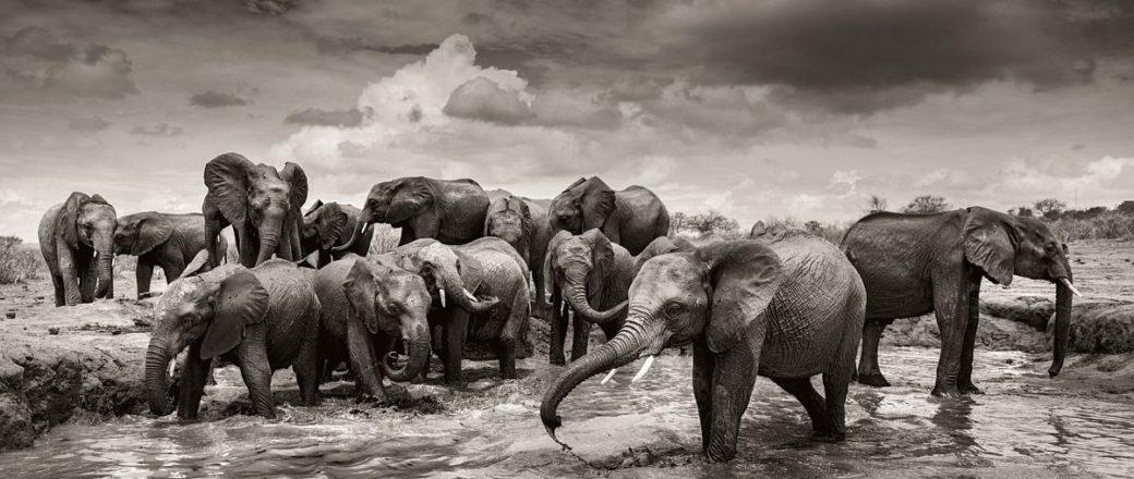 Joachim Schmeisser: Elephants in Heaven