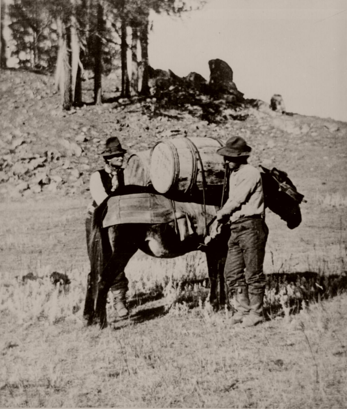 Cinching and loading pack mule with flour during starvation march of Gen. George Crook's expedition into the Black Hills, 1876.