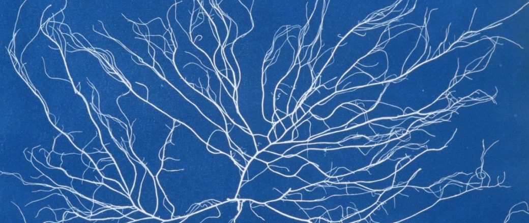 Biography: 19th Century pioneer of Cyanotype photography Anna Atkins
