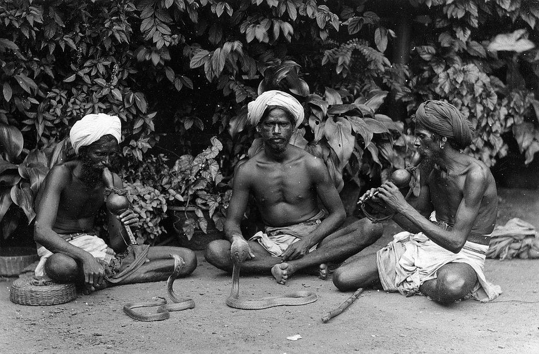 Snake charmers, Ceylon, ca. 1880s