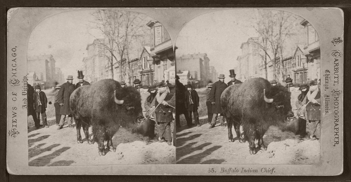 Buffalo Indian chief. (People looking at a buffalo on an unidentified street.), by Carbutt, John, 1832-1905