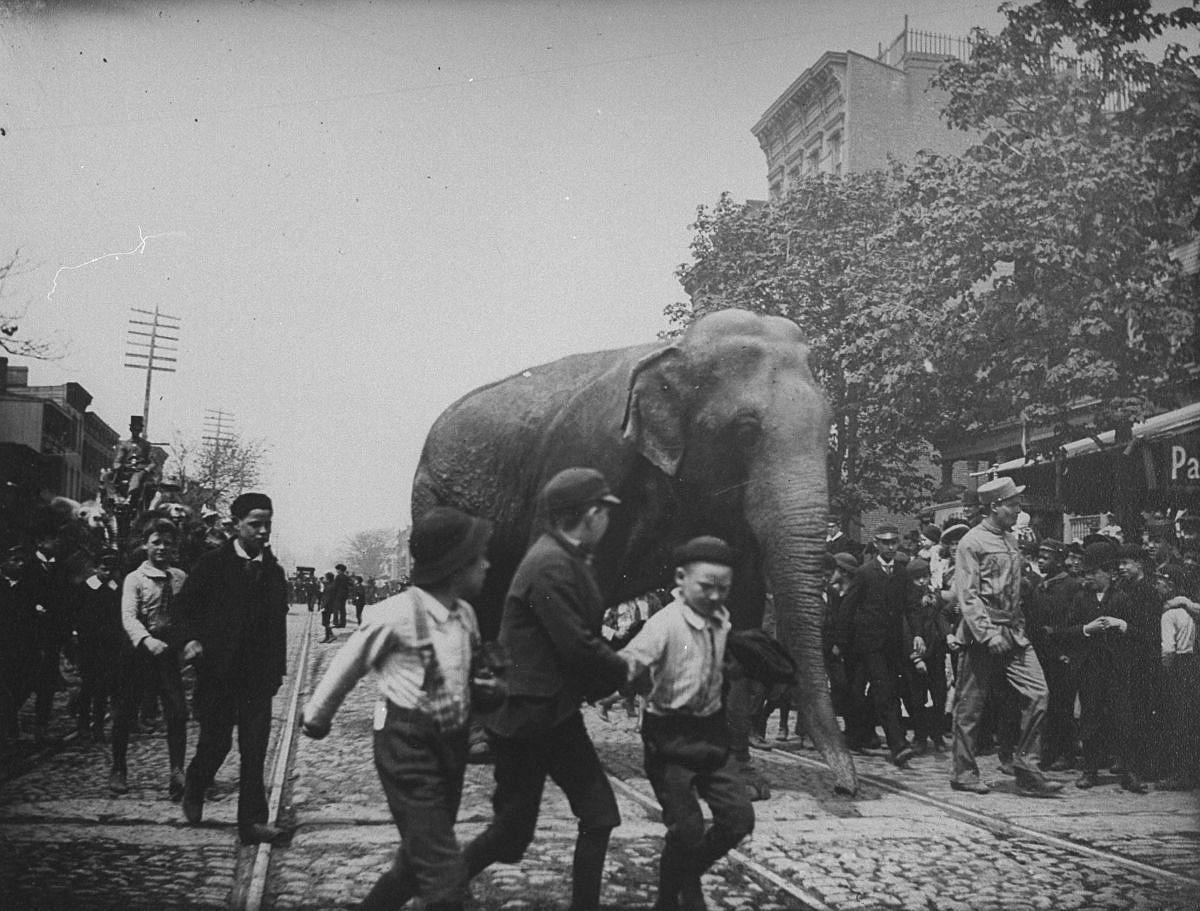 June 1, 1891 - An elephant from the Barnes Circus walks down Atlantic Street in Brooklyn.