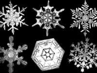 Biography: 19th Century photographer of Snowflakes – Wilson Bentley