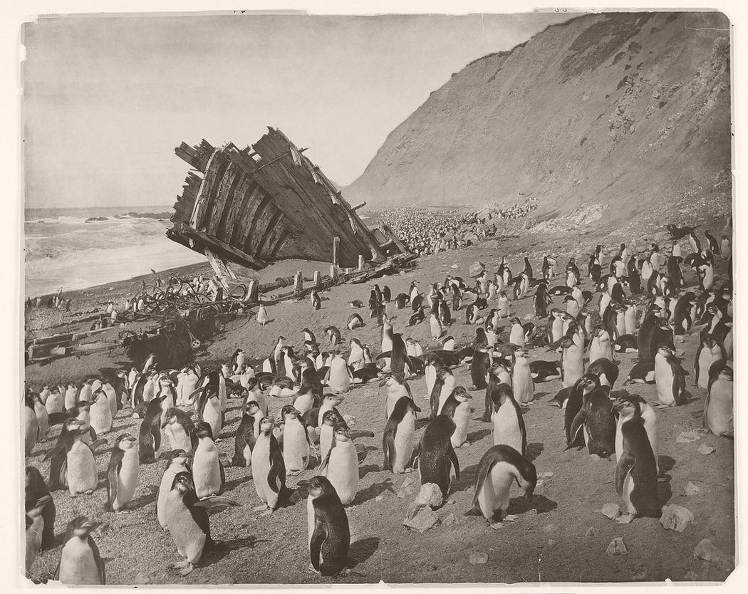 Wreck of the 'Gratitude', Macquarie Island, 1911