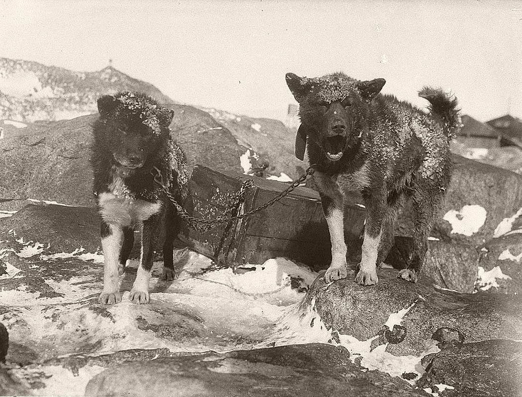 Basilisk and Ginger at Main Base, circa 1912