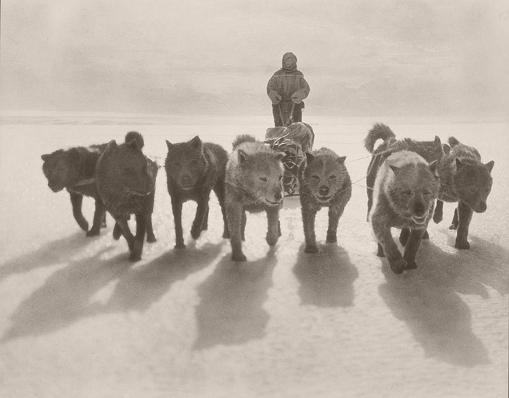 Huskies pulling sledge, circa 1912