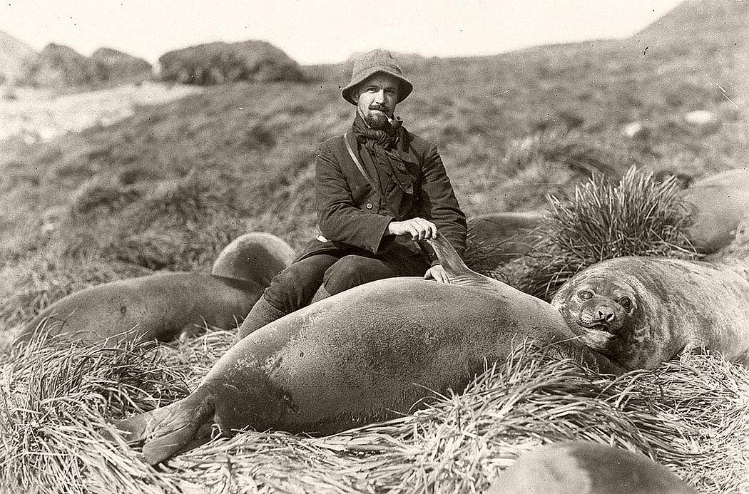 Arthur Sawyer and sea elephant pup, circa 1912