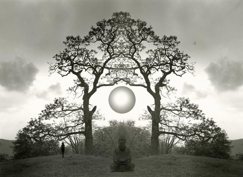 Meditation tree, 2015