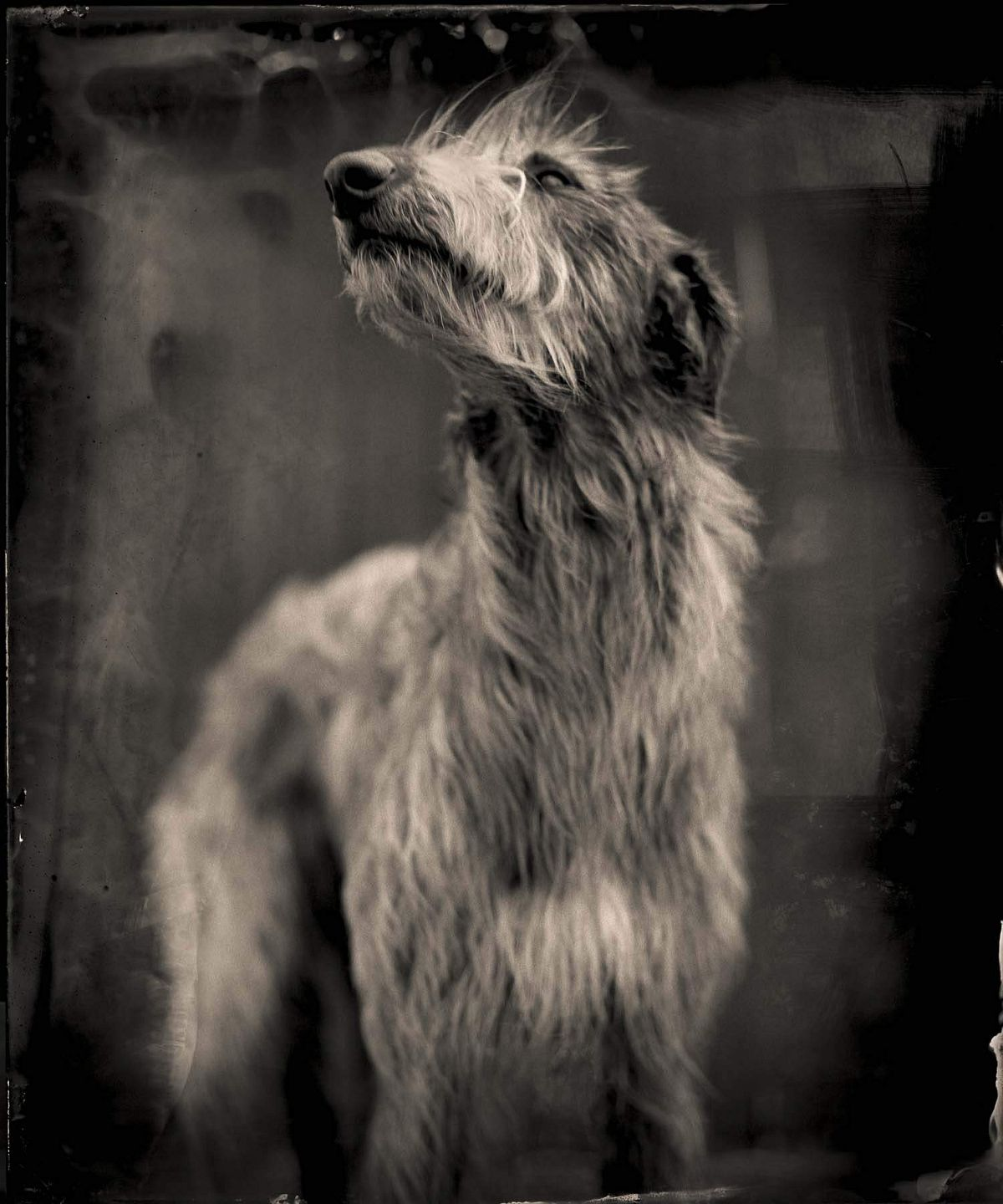 Bog Dog by Keith Carter, 2014