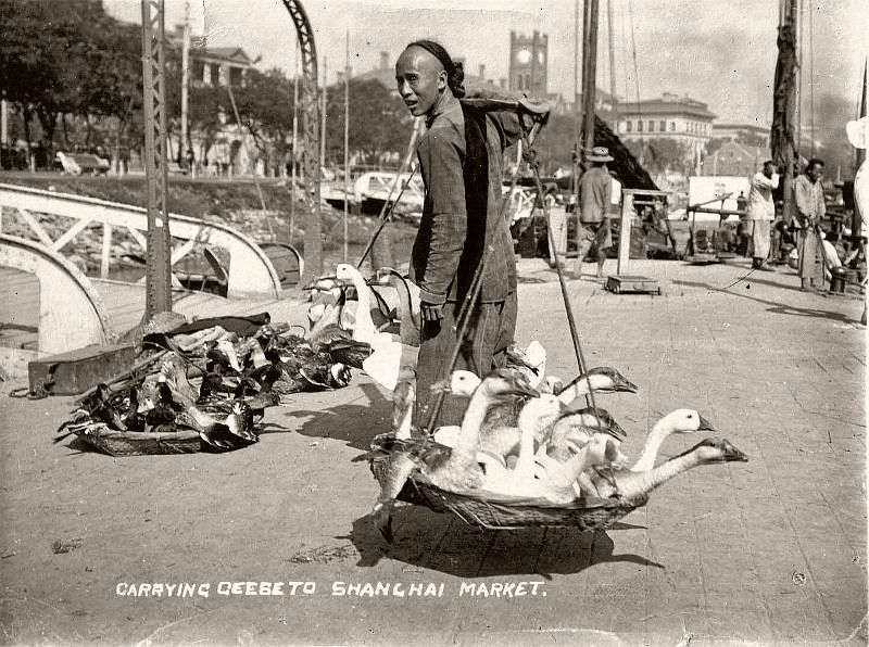 Carrying geese to Shanghai Market