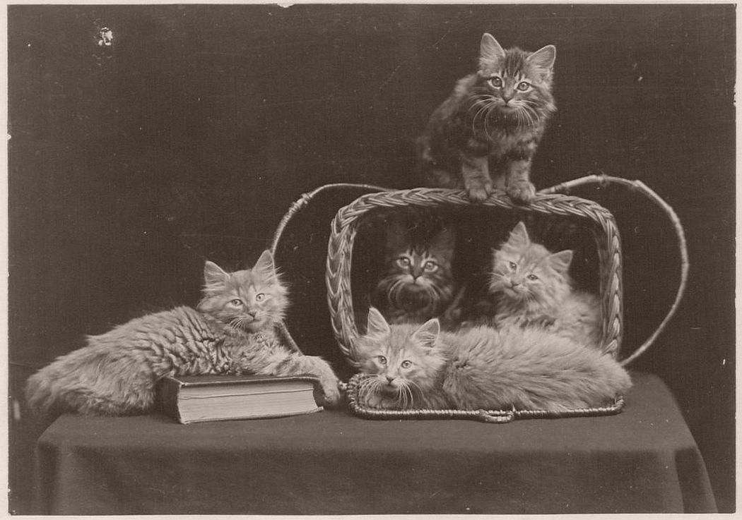The Globe Kittens (1902)