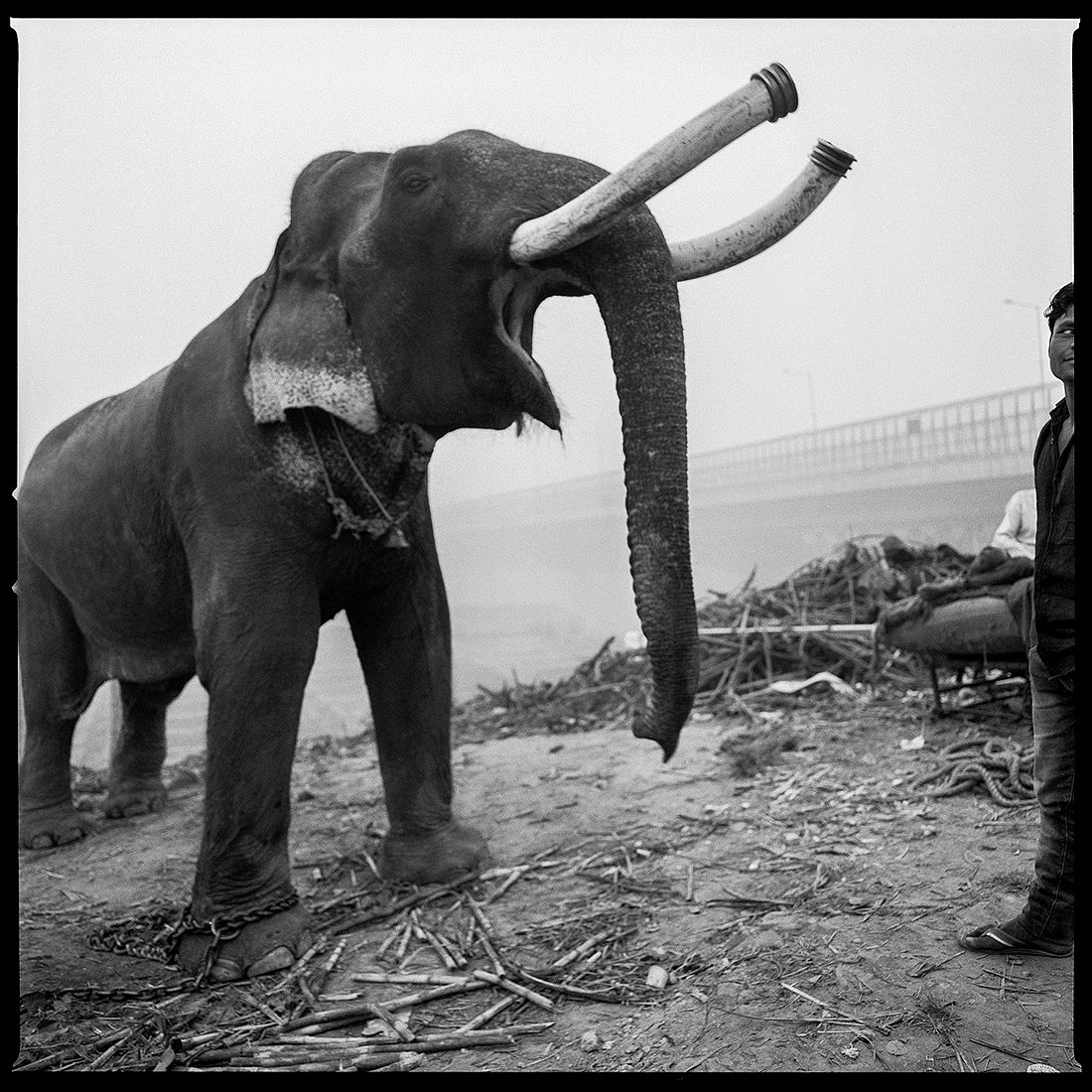 © Arun Nangla: The elephant in the room / MonoVisions Photography Awards 2018 winner