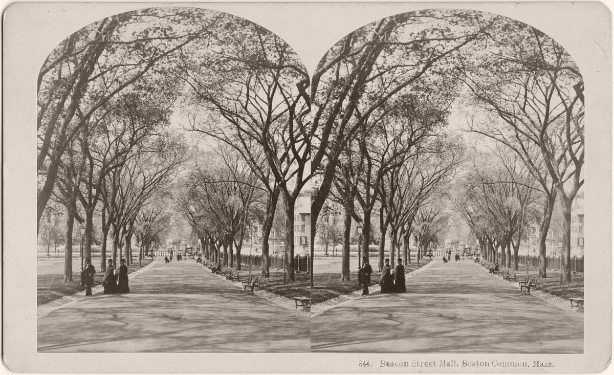 Stereograph of Boston Common by B.W. Kilburn