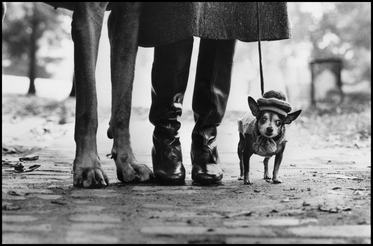 USA,New York city. New York, 1974. Felix, Gladys and Rover. © Elliott Erwitt | Magnum Photos