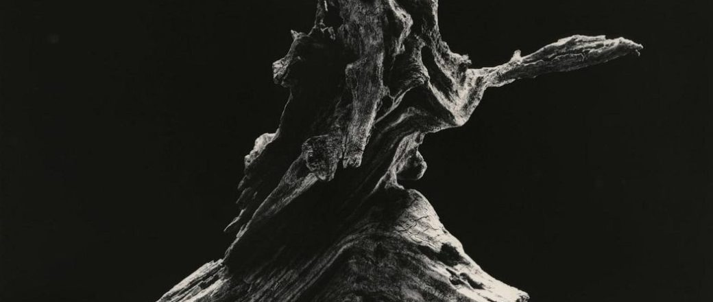 Masao Yamamoto: Microcosm Macrocosm