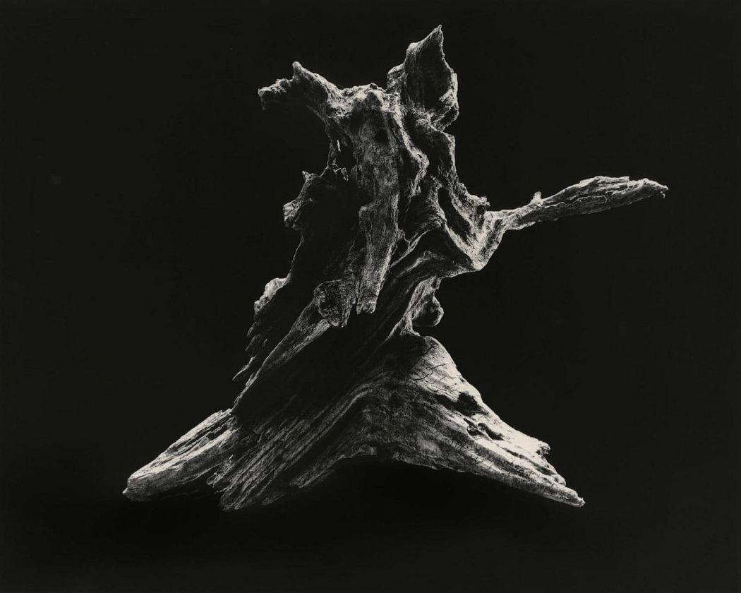 """Yamamoto Masao Shizuka=Cleanse #3037 """"Dance [E]"""" 2014 45 x 56 cm silver gelatine print © Yamamoto Masao"""