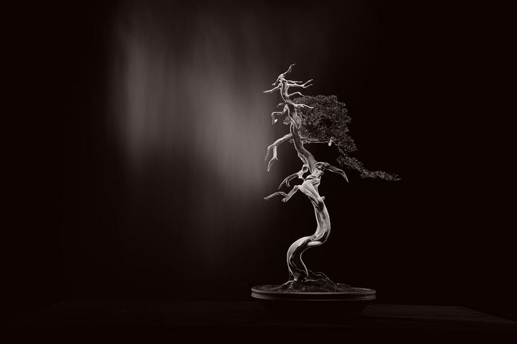Yamamoto Masao Bonsai Microcosm Macrocosm (1) 28 x 35 cm 2018 silver gelatine print © Yamamoto Masao