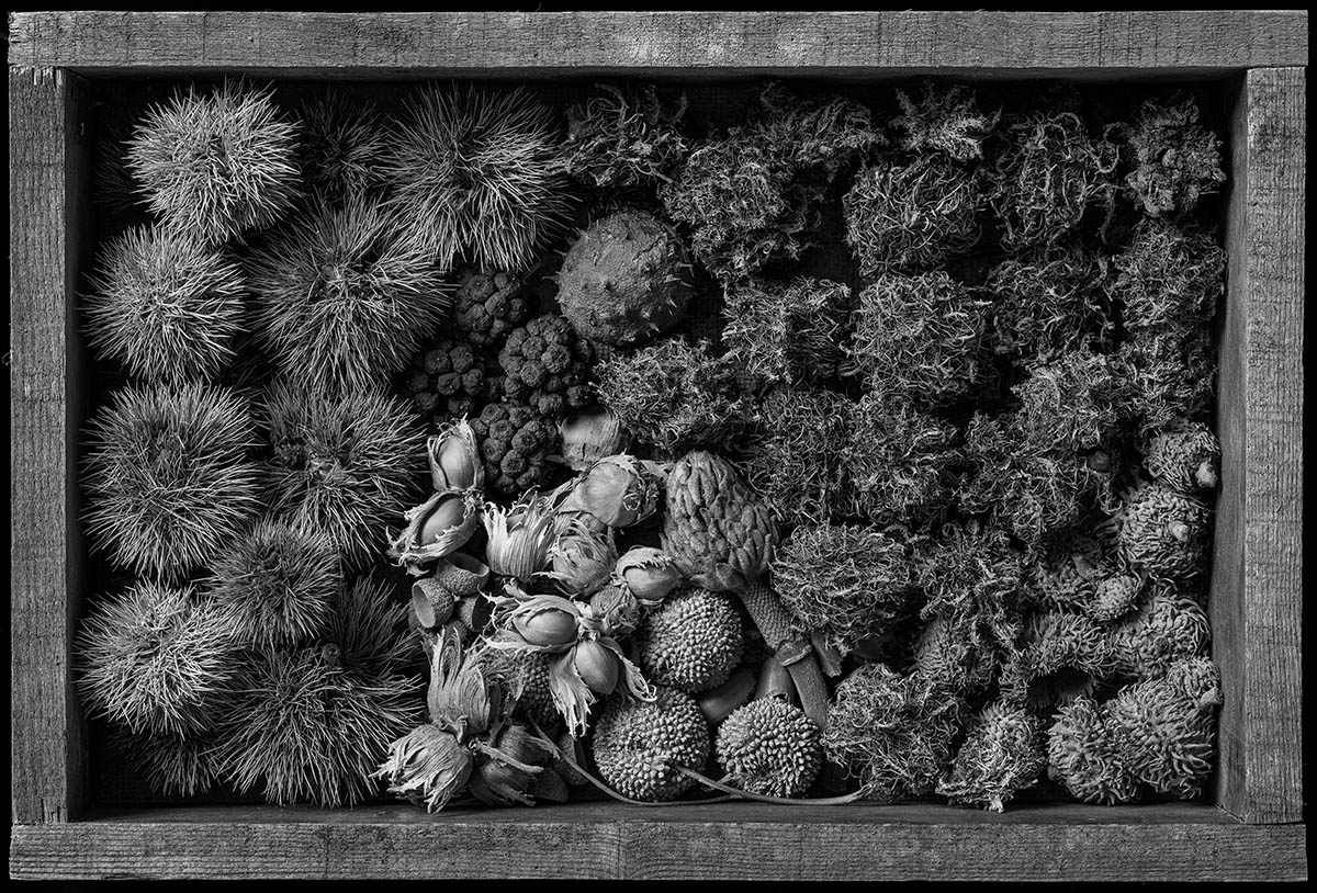 An arrangement in a wooden box of a variety of items derived from trees and bushes.