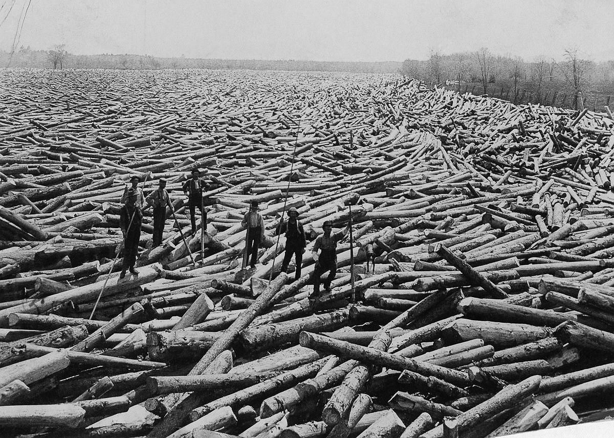 August 1907  Men stand on piles of cut trees in rural New York.  Image: U.S. Gov'T Agriculture Forest Service/National Geographic Creative/Corbis