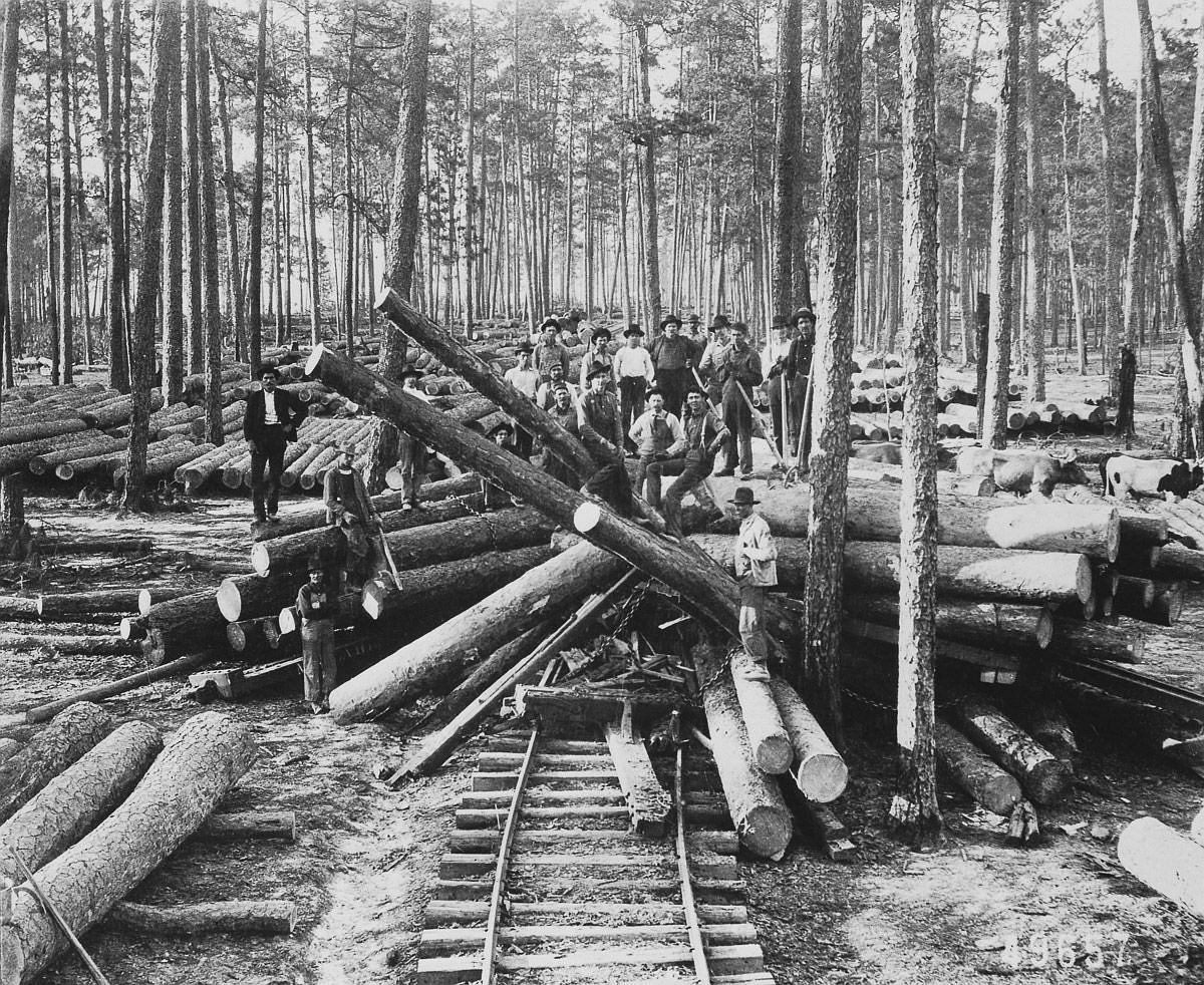March 15, 1904  A logging crew stands among cut old growth longleaf pine in Vernon Parish, Louisiana.  Image: Corbis