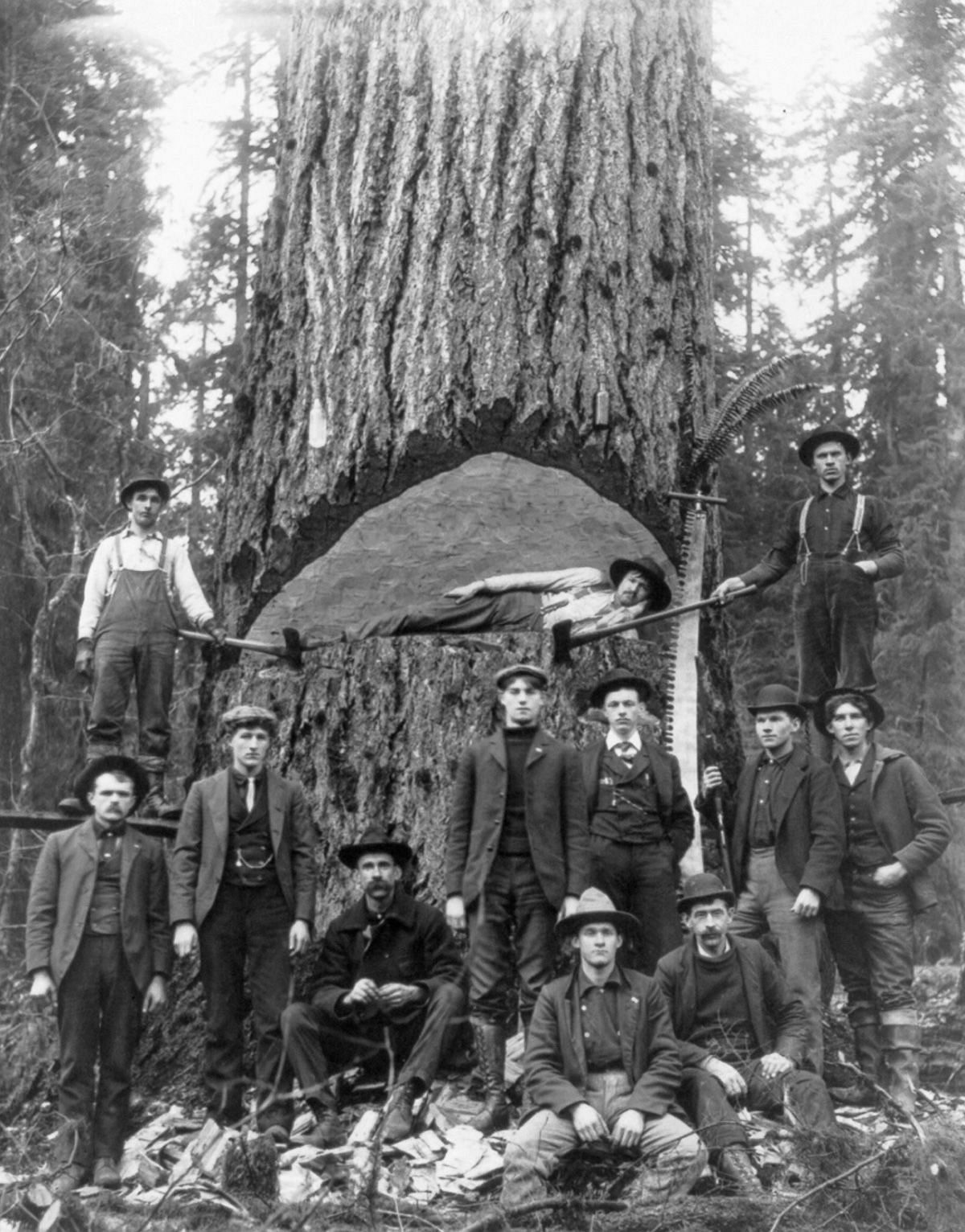 1902  Lumberjacks pose with a fir tree in Washington.  Image: Library of Congress