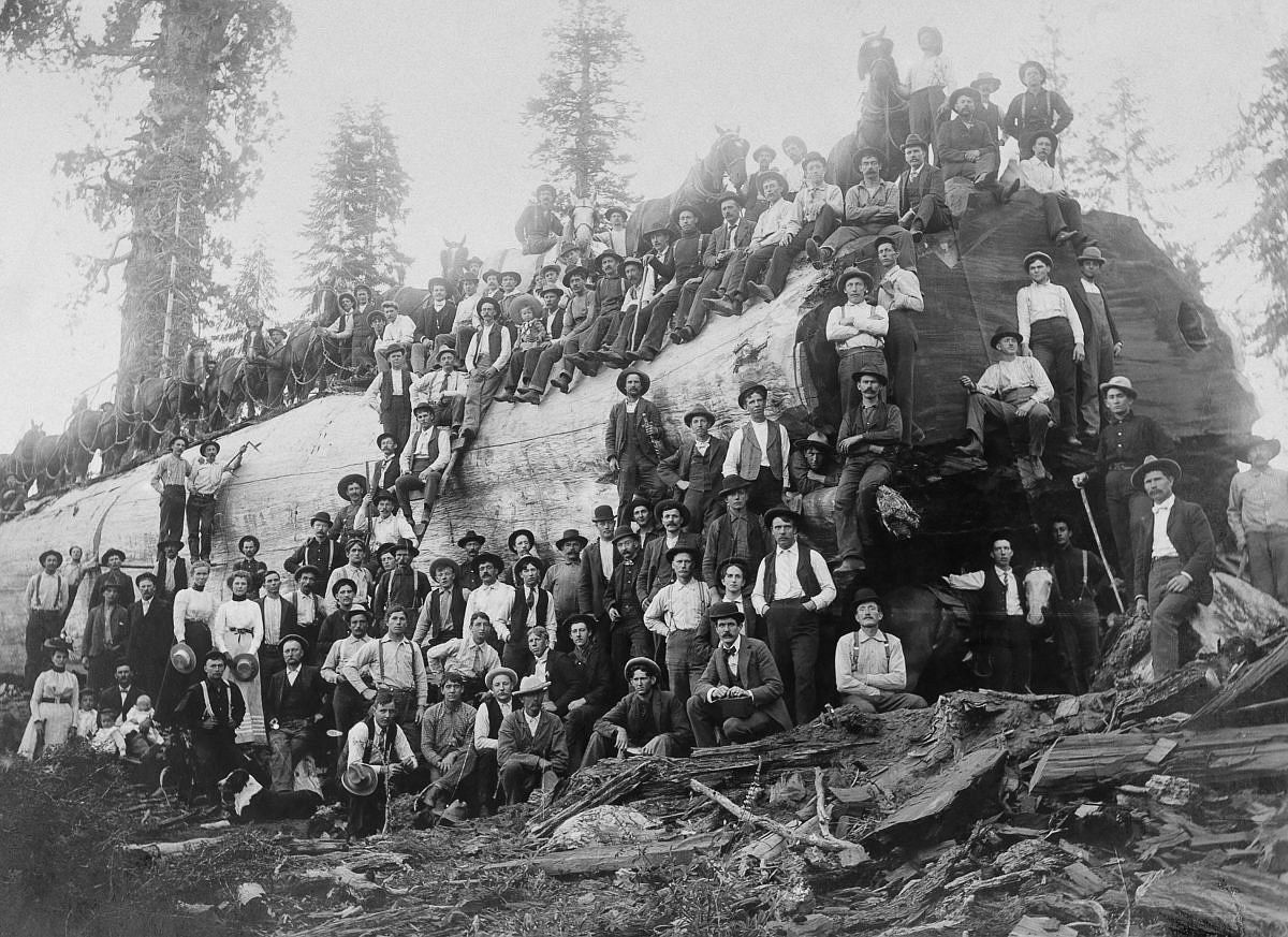 1917  Over 100 people stand with a logged giant sequoia tree in California.  Image: A. R. Moore/National Geographic Creative/Corbis
