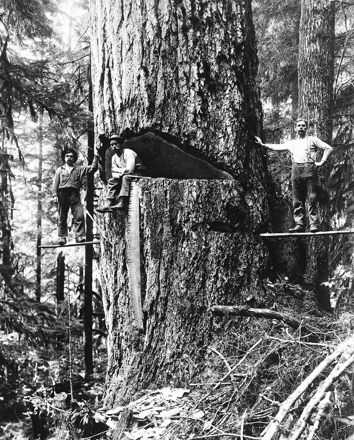 1918  Three lumberjacks pose by a large Douglas fir ready for felling in Oregon.  Image: Corbis