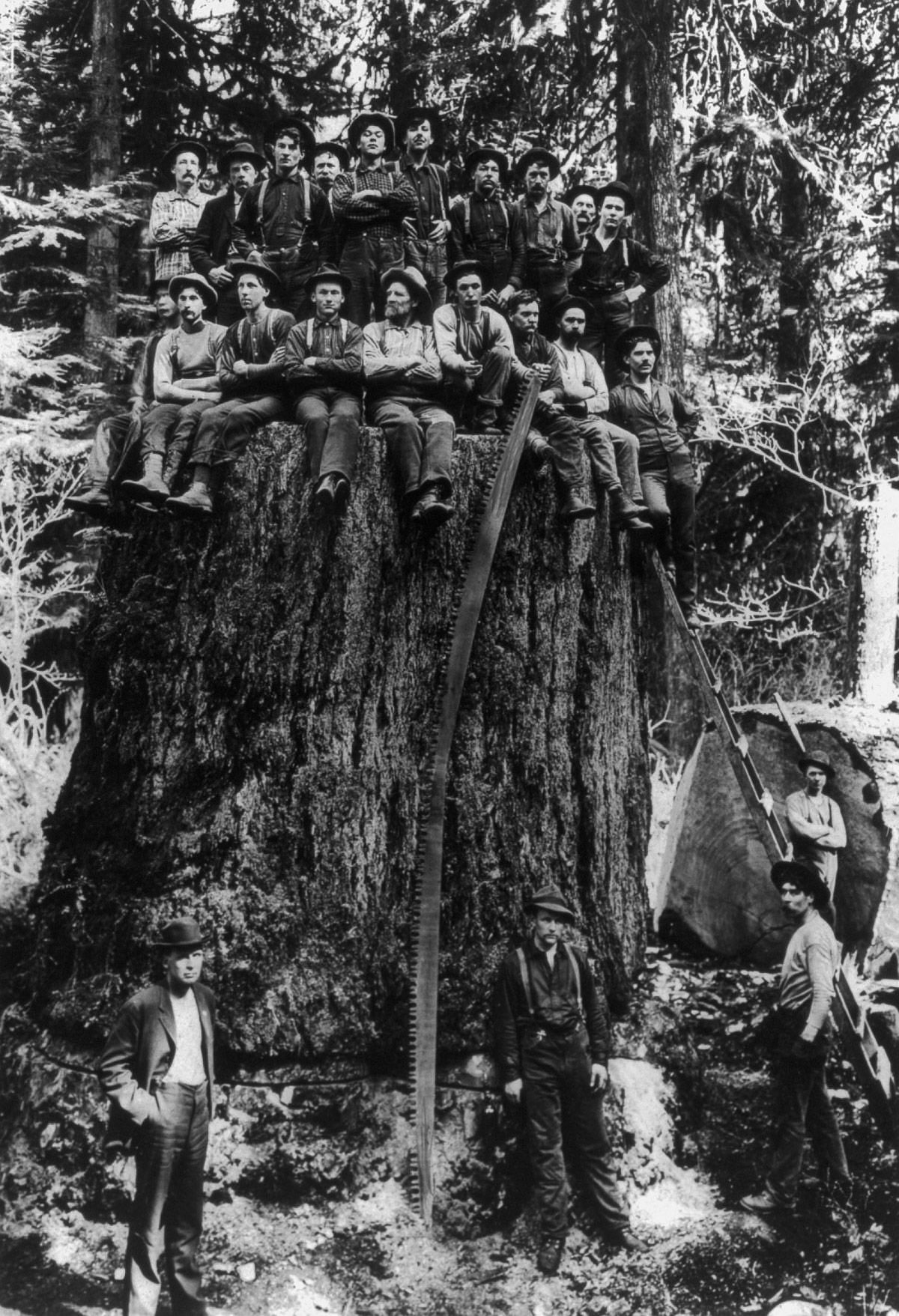1904  Lumberjacks pose on the stump of a tree which was displayed at St. Louis World's Fair.  Image: Library of Congress