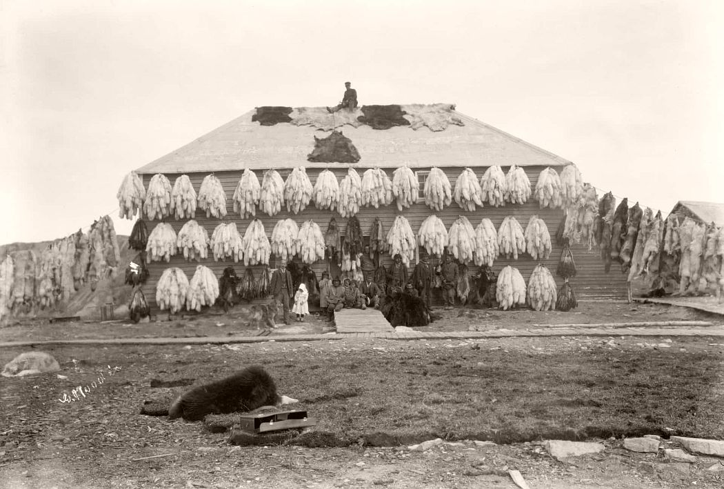Hudson Bay Company store covered with furs, Churchill, Manitoba, c.1906-09
