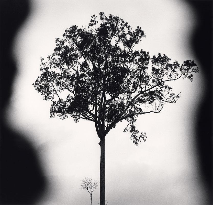 Michael Kenna, Banteay Srei Trees, Angkor, Cambodia, 2018