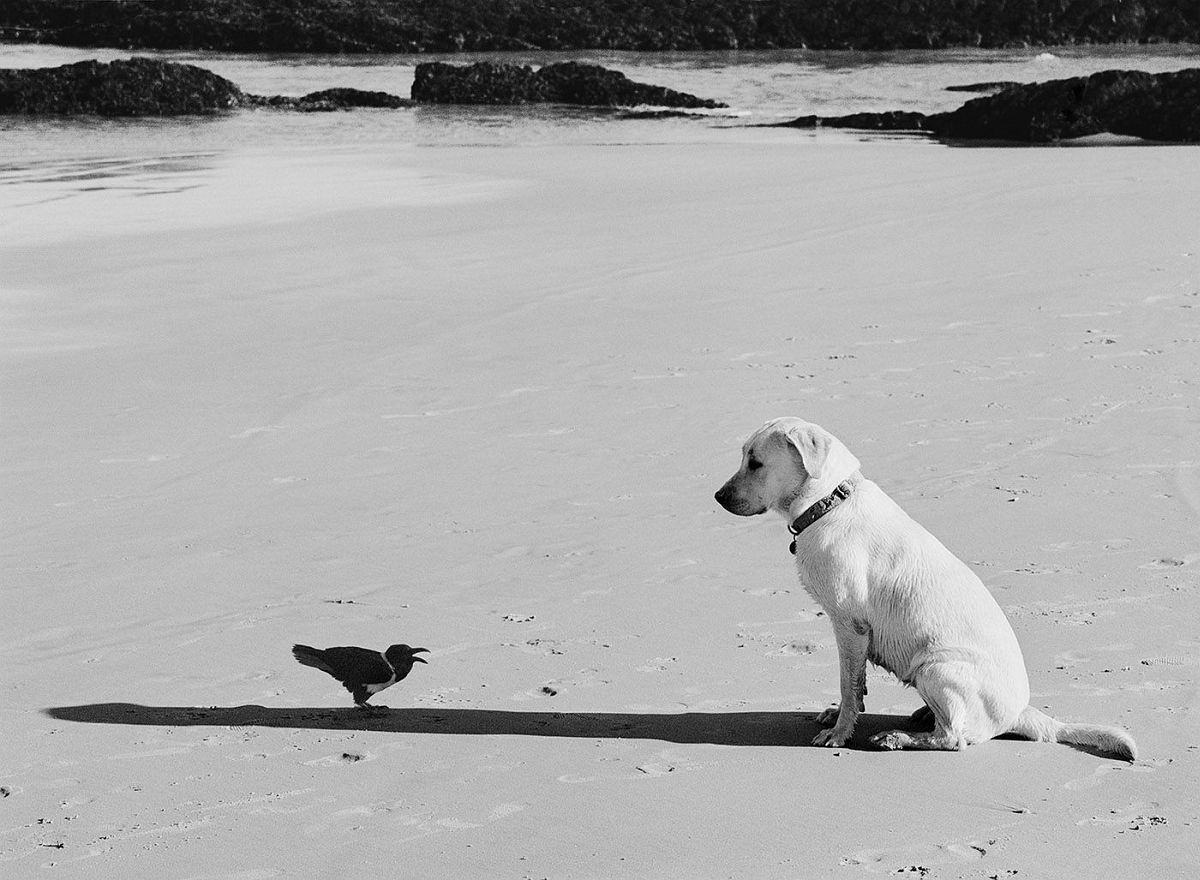 Western Cape, South Africa (dog and bird), 2002