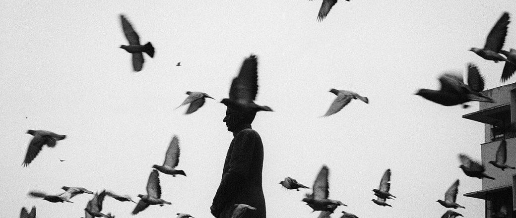 Pentti Sammallahti's: Birds