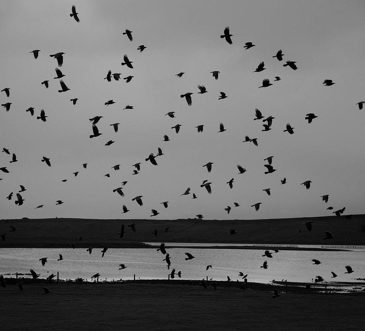 Hamnavoe, Yell, Shetland, 2016