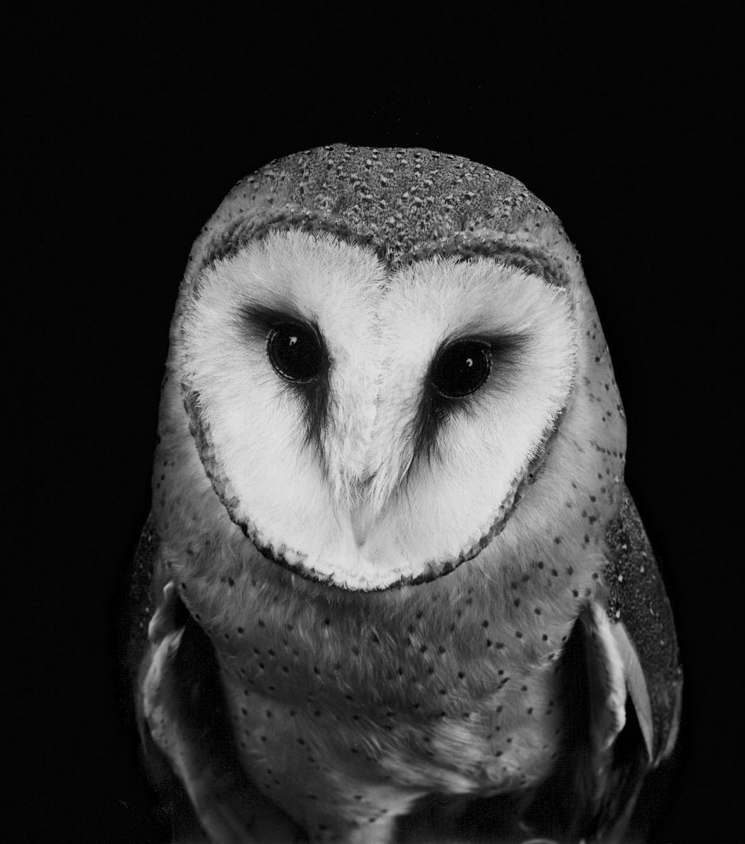 © Walter Schels: Animals