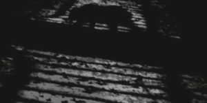 HIROO FUJITANI: THE LYRIC POETRY – A CAT
