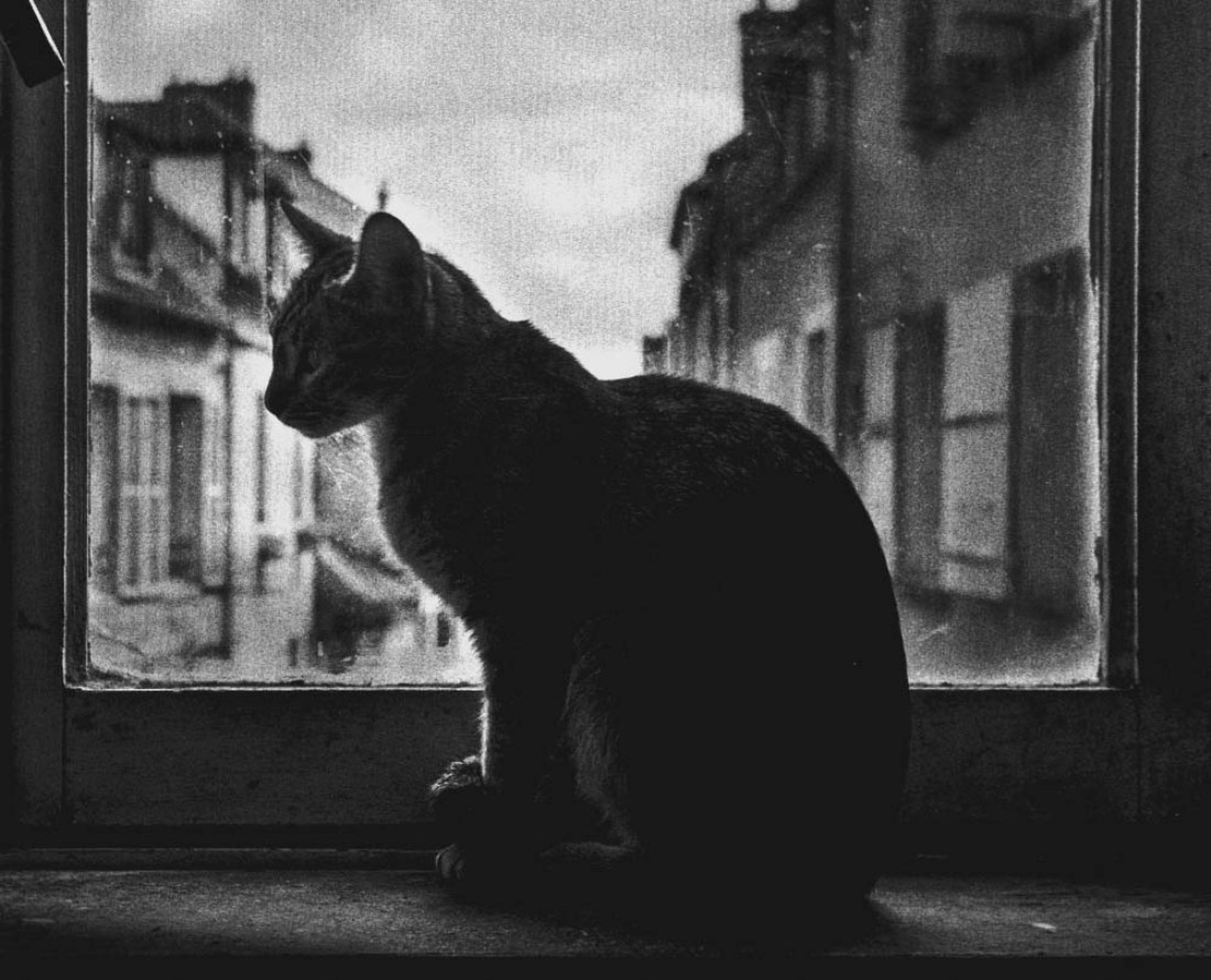 © HIROO FUJITANI: THE LYRIC POETRY - A CAT / MonoVisions Photography Awards 2018 winner