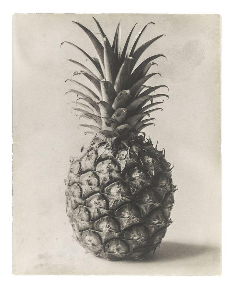 Karl Blossfeldt: Pineapple. Fruit spike, n. d. © Courtesy Die Photographische Sammlung/SK Stiftung Kultur, Köln in Kooperation mit der Sammlung Karl Blossfeldt in der Universität der Künste, Berlin Universitätsarchiv, 2019