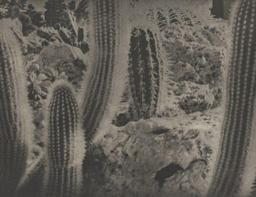 Karl Blossfeldt and Jim Dine: Poetry of Plants