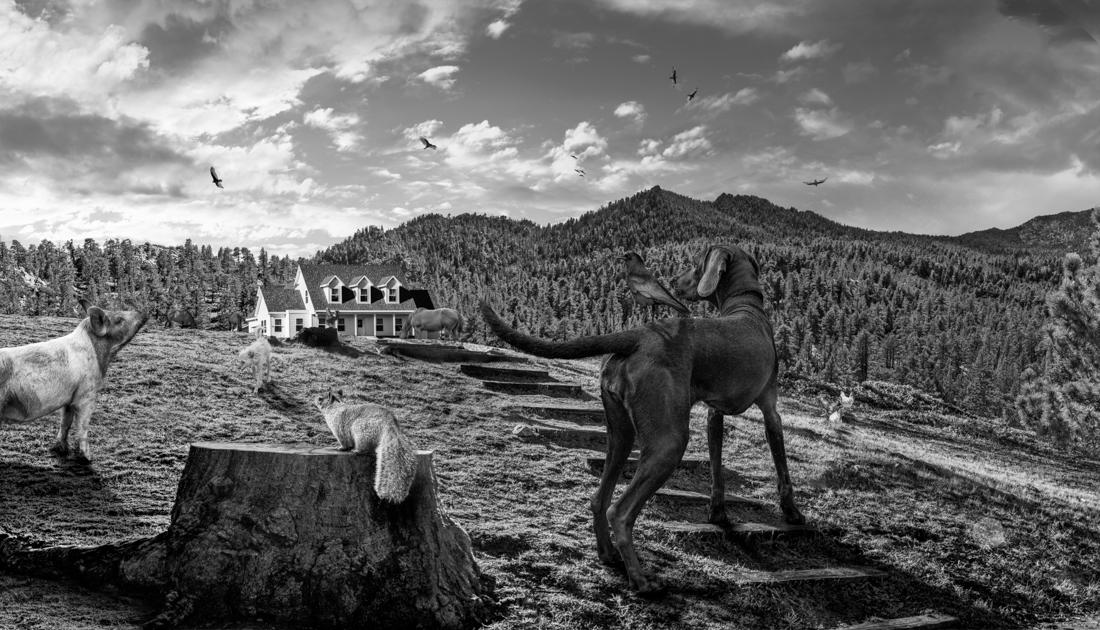© Oscar Alcantara: Conceptual Photocompositions / MonoVisions Photography Awards 2018 Honourable Mention