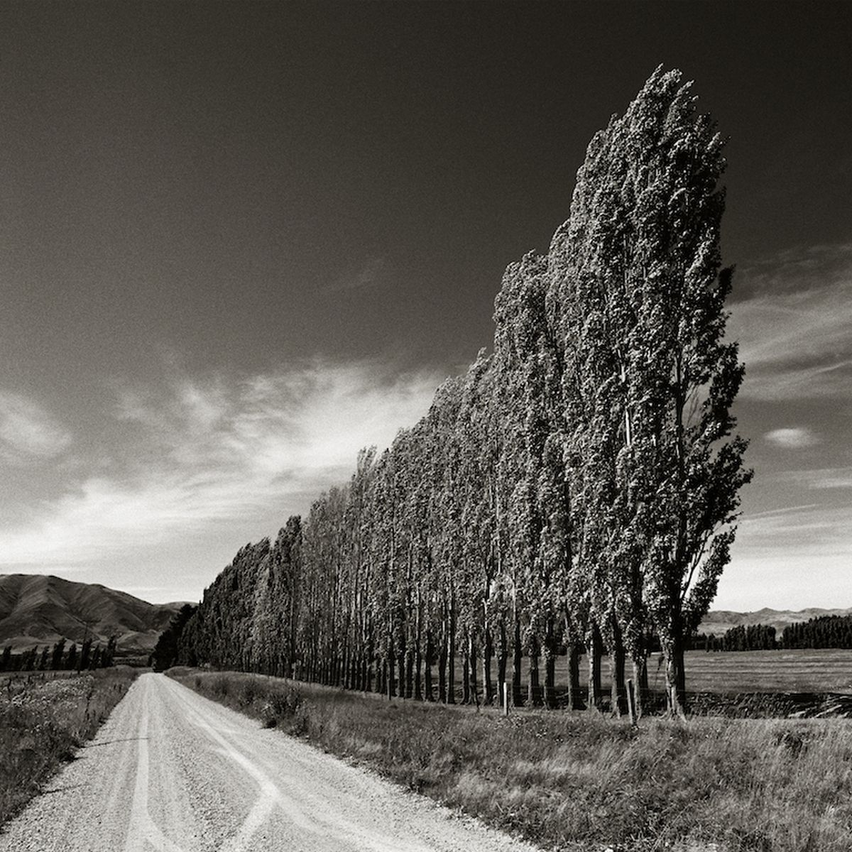 CARNETS DE VOYAGE. CHRIS SIMPSON. Poplars, South Island, New Zeland, 2003. Archival pigment print.