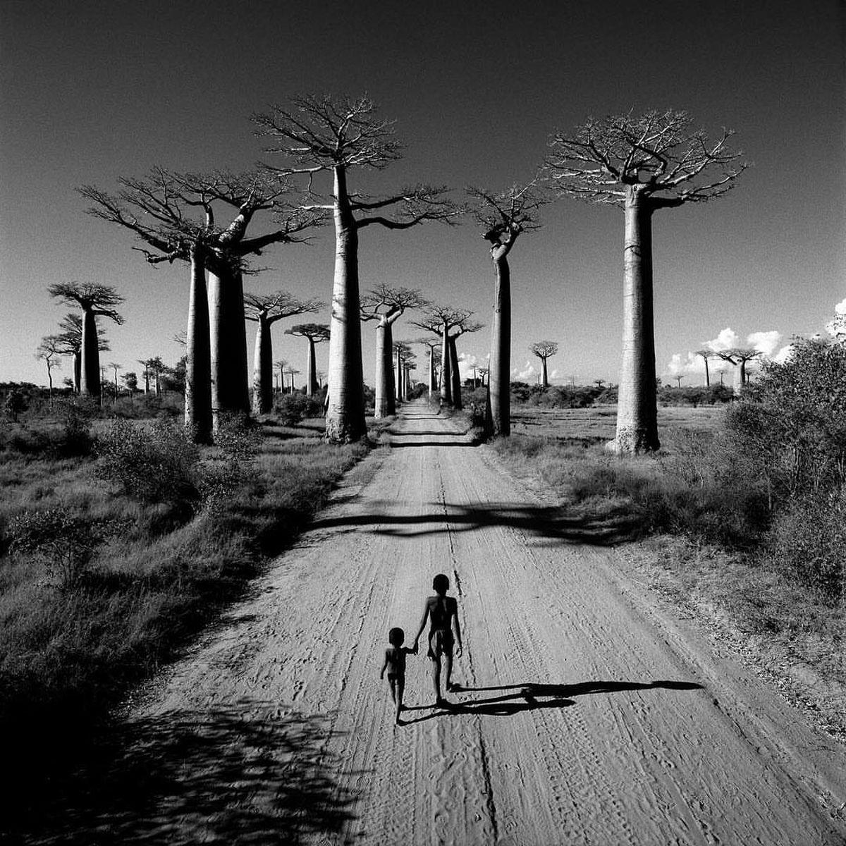 CHRIS SIMPSON Allée des Baobabs, Madagascar, 1997 Archival pigment print
