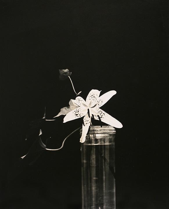 Lily, c. 1925  Gelatin siler print, printed c. 1925