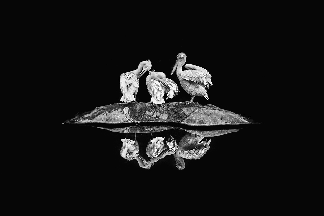 1ST PLACE – Black & White Nature and Wildlife PHOTO of the Year 2019, Reflection – Daria Huxley