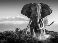 David Yarrow: It's Five O'Clock Somewhere