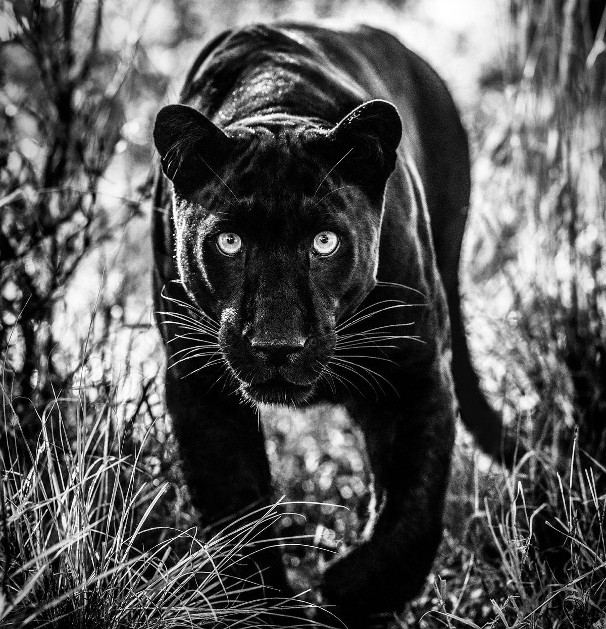 David Yarrow Wakanda, 2019