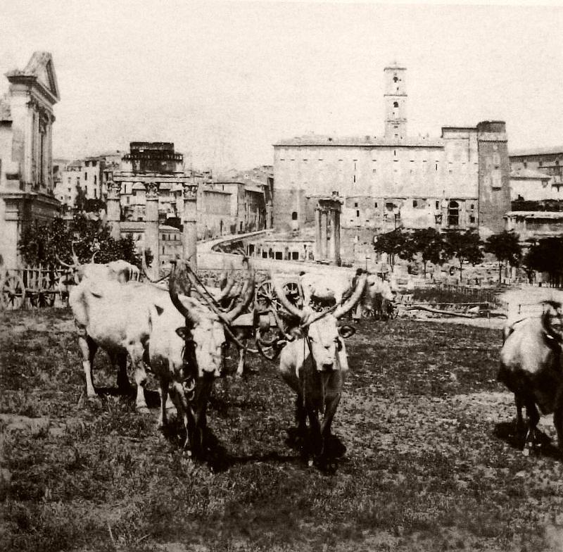 Oxen and carts, Rome, circa, 1862